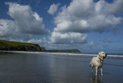 Dog friendly cottages Brittany